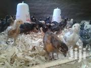 Cdo Poultry Farm | Other Animals for sale in Nothern Region, Lira