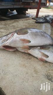 Fresh Fish | Feeds, Supplements & Seeds for sale in Central Region, Kampala