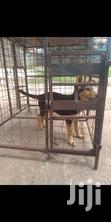 Guard Dog Puppy | Dogs & Puppies for sale in Wakiso, Central Region, Nigeria