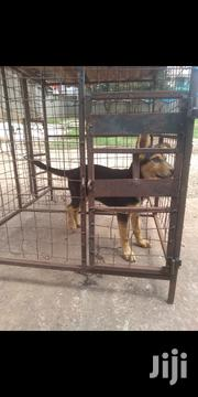 Guard Dog Puppy | Dogs & Puppies for sale in Central Region, Wakiso