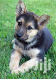 German Sheperd Puppies | Dogs & Puppies for sale in Kampala, Central Region, Nigeria