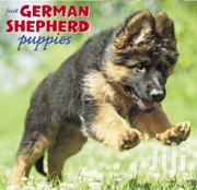 German Sheperd Puppies | Dogs & Puppies for sale in Central Region, Kampala