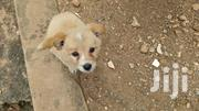 Puppy For Sale | Dogs & Puppies for sale in Central Region, Kampala