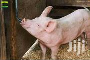 Pig Nipple Drinkers | Farm Machinery & Equipment for sale in Central Region, Kampala