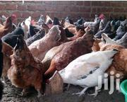Kuroiler And Broiler Chicken For Sell | Other Animals for sale in Central Region, Kampala