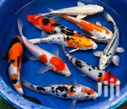 Freshwater Aquarium Fish | Fish for sale in Central Region, Kampala