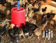 Kuroiler And Broiler Chicken For Sell | Livestock & Poultry for sale in Central Region, Kampala