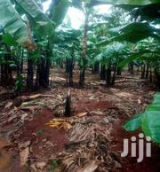 6.5 Acres Of Land Banana Plantation For Sale In Zirobwe Kikyusa | Land & Plots For Sale for sale in Central Region, Kampala