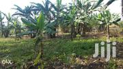 50x100ft Plot Of Land For Sale In Mucwa, Fort Portal At 29 Millions.   Land & Plots For Sale for sale in Western Region, Kabalore