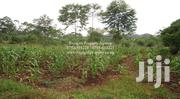 7 ACRES OF TITLED FARMLAND FOR SALE AT KYABIRWA JINJA | Land & Plots For Sale for sale in Eastern Region, Jinja