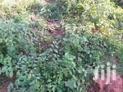 1 Sq Milo of Land in Gomba | Land & Plots For Sale for sale in Central Region, Masaka
