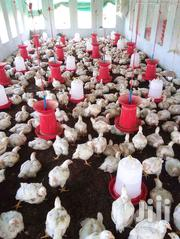 Broilers Chickens | Livestock & Poultry for sale in Central Region, Kayunga
