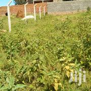Plot With Lake Victoria View And Cool Breeze Sorrounding And Modern | Land & Plots For Sale for sale in Central Region, Kampala