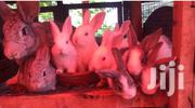 Exotic Rabbits | Other Animals for sale in Central Region, Kampala