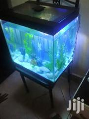 Home Aquarium | Home Accessories for sale in Central Region, Kampala