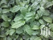 Passion Fruit Seedlings | Feeds, Supplements & Seeds for sale in Central Region, Kampala