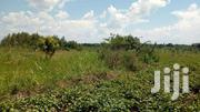 25 Acres Of Land In ZILOBWE-WABITUNGULU  Each Acre At 8m | Land & Plots For Sale for sale in Central Region, Luweero