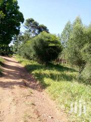 18 Acres With Eucalyptus Trees In Kikyusa At 8m Each | Land & Plots For Sale for sale in Central Region, Luweero