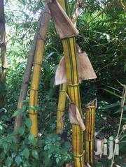 BAMBOO For Construction / Decoration / Finishing Whole Sale | Feeds, Supplements & Seeds for sale in Central Region, Kampala