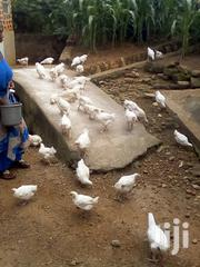 Broilers Chicken | Livestock & Poultry for sale in Central Region, Kampala