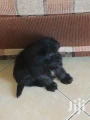 Mltz Puppy At 3 Weeks | Dogs & Puppies for sale in Central Region, Kampala