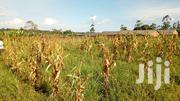 27 Acres Of Private Mailo Land In Mukono_nakifuma  Each At 13m | Land & Plots For Sale for sale in Central Region, Mukono