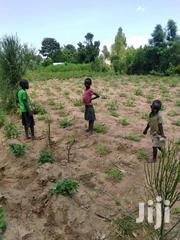 1,2 Acres Of Land With Very Good Soil At Mile 6 Tororo | Land & Plots For Sale for sale in Eastern Region, Tororo
