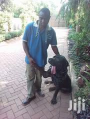 Dog Training Services | Dogs & Puppies for sale in Central Region, Kampala
