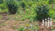 Land 100*100 | Land & Plots For Sale for sale in Central Region, Mukono