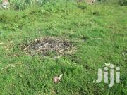 Cheap Land On Sale At 6m In Kito - Kirinya | Land & Plots For Sale for sale in Central Region