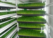 Save 60% On Feeds.Hydroponic Fodder Trays | Manufacturing Services for sale in Central Region, Kampala
