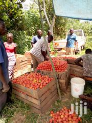 Juicy Tomatoes | Feeds, Supplements & Seeds for sale in Central Region, Mukono