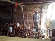MAKTECH Poultry Solution   Farm Machinery & Equipment for sale in Central Region, Kampala
