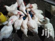 Broilers Chickens | Livestock & Poultry for sale in Central Region, Kampala