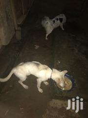 Dogs For Sale | Dogs & Puppies for sale in Central Region, Kampala