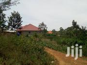 100x100ft Titled Plots of Land for Quick and Cheap Sale in Bukerere | Land & Plots For Sale for sale in Central Region, Wakiso