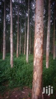 Forest Eucalyptus | Feeds, Supplements & Seeds for sale in Eastern Region, Mbale