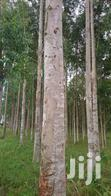 Forest Eucalyptus | Feeds, Supplements & Seeds for sale in Mbale, Eastern Region, Nigeria
