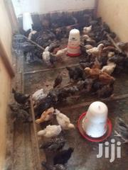 Chickens For Sale | Livestock & Poultry for sale in Central Region, Kampala