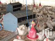 Broiler Chicken | Livestock & Poultry for sale in Central Region, Mukono