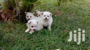 Puppies on Sale | Dogs & Puppies for sale in Central Region, Kampala