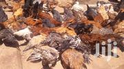 Kroilers For Sale | Livestock & Poultry for sale in Central Region, Kampala