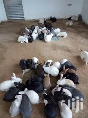 Exotic Hybrid Rabbits | Livestock & Poultry for sale in Central Region, Kampala