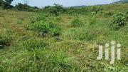 100 Acres In Kalungi For Sale | Land & Plots For Sale for sale in Central Region, Nakasongola