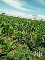 350 Acres In Bbale-kayunga Each At 2.5m | Land & Plots For Sale for sale in Central Region, Kayunga