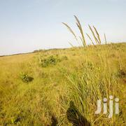 The Land With Clear Titles | Land & Plots For Sale for sale in Central Region, Luweero
