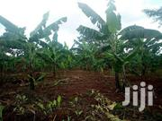 A Fertile Land Of 60 Acres On Sale In Ziba-nkokonjeru Each Is At 8m | Land & Plots For Sale for sale in Central Region, Mukono