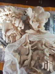 Oyester Mashrooms For Sale | Meals & Drinks for sale in Central Region, Kampala