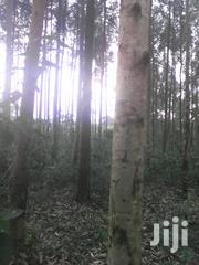 68 Acres Of Eucalyptus In Mityana-myanzi | Land & Plots For Sale for sale in Central Region, Kampala
