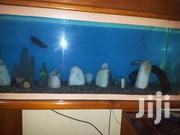 Precious Aquarium | Fish for sale in Central Region, Kampala